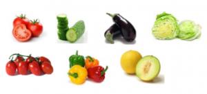 چه محصولاتی را در گلخانه میتوانیم بکاریم؟