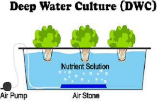 روش کشت آبی در گلخانههای هیدروپونیک
