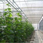 بهترین ساختار گلخانه چگونه است؟