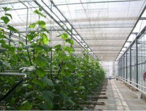 ویژگی های محل احداث گلخانه چیست؟