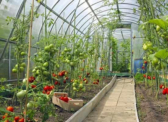 سیستمهای حرارتی گلخانه
