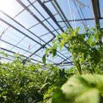 عوامل موثر بر شدت نور گلخانه چیست؟