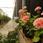 مشکلات تولید محصولات گلخانهای در اقلیمهای متفاوت