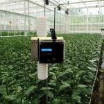 نقش دی اکسید کربن گلخانه برای گیاهان