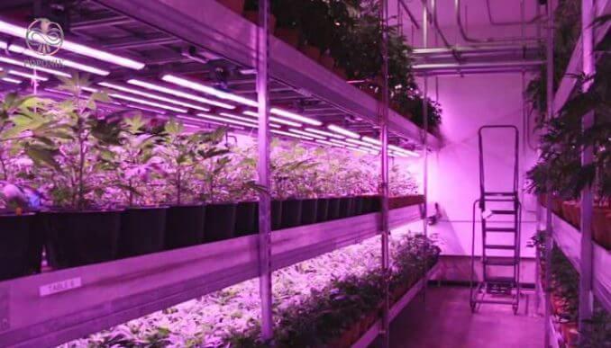 ایجاد نور مصنوعی برای گیاهان