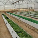 چگونه بستر گلخانه را ضدعفونی کنیم؟