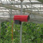 پاسخ گیاهان به تزریق دی اکسید کربن