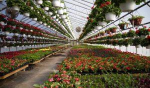 انواع مسیرهای دسترسی و کنترل دمایی در گلخانه